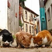 littlecats